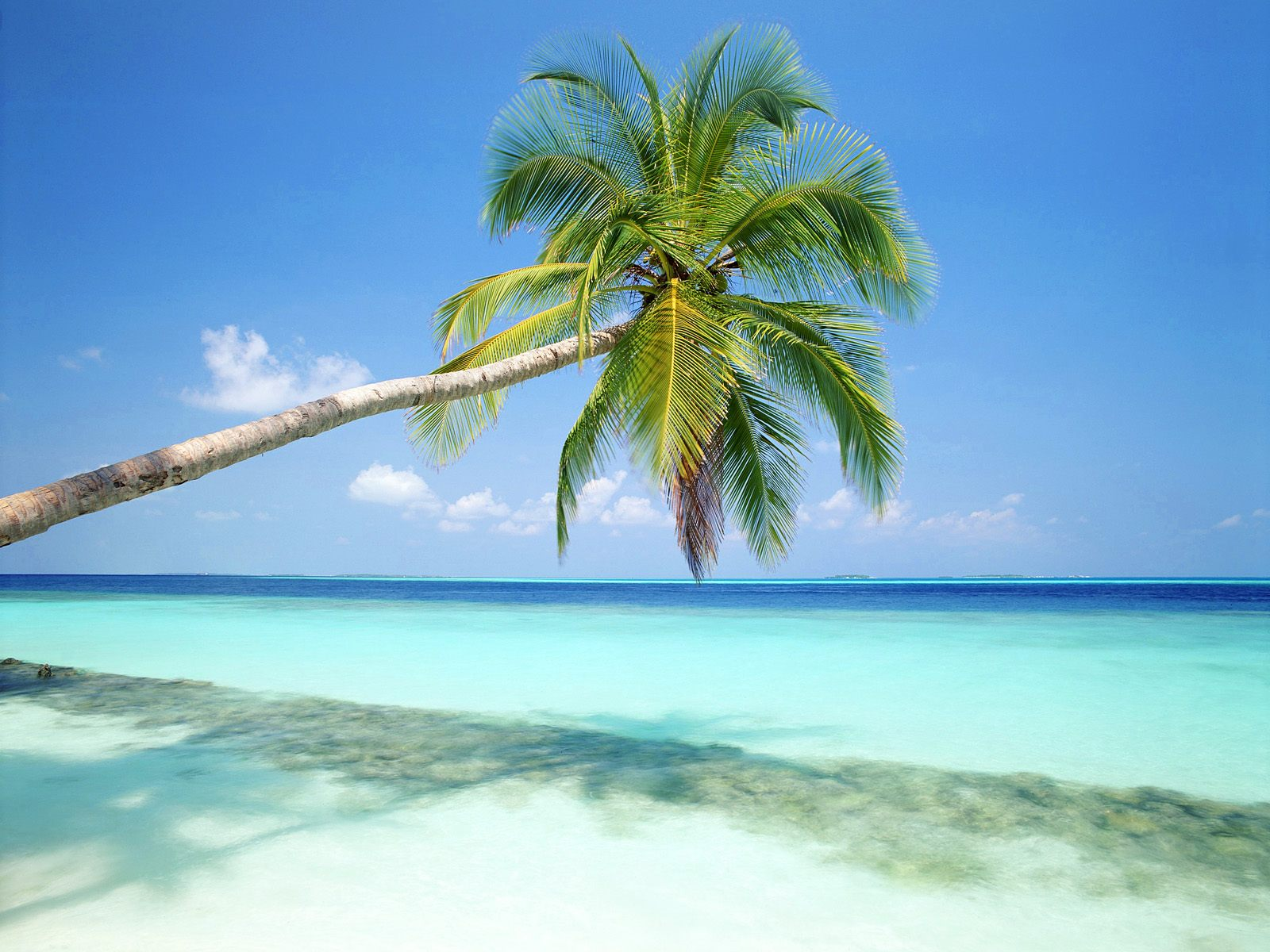 tropical paradise wallpaper - photo #21